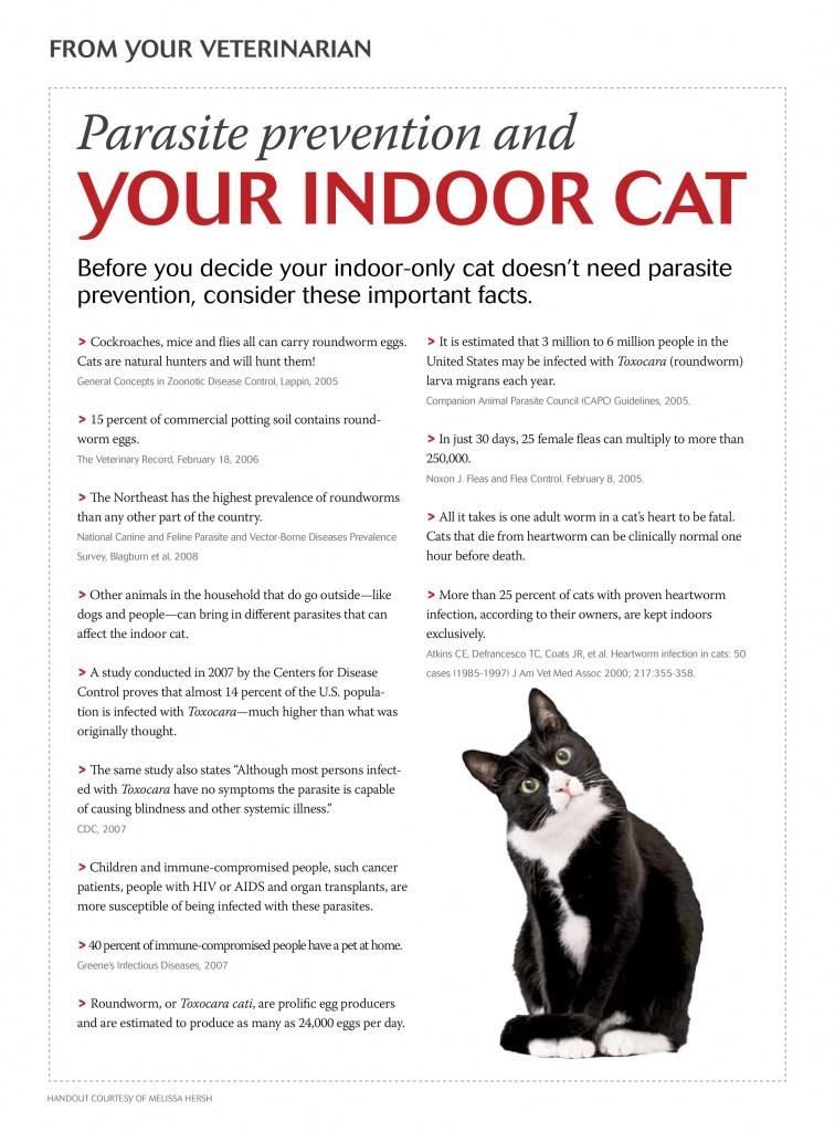 indoorcats